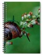 Copse Snail Spiral Notebook