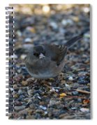 Dark Eyed Junco Spiral Notebook