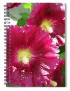 Giant Single Carmine Hollyhock Spiral Notebook