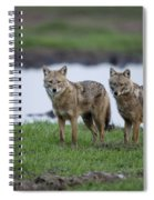 Golden Jackal Canis Aureus Spiral Notebook