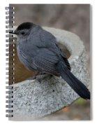 Grey Catbird Spiral Notebook
