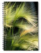 Hordeum Jubatum Grass Spiral Notebook