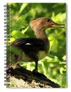 Immature Hooded Merganser Spiral Notebook