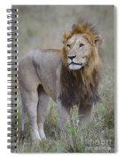 Male Lion Spiral Notebook