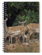 Mesopotamian Fallow Deer  Spiral Notebook