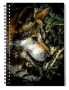 Mexican Grey Wolf Spiral Notebook
