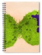 Mitosis, Late Telophase, Tem Spiral Notebook
