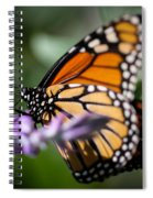 Monarch Danaus Plexippus Spiral Notebook