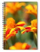 Novelty French Marigold Named Mr. Majestic Spiral Notebook