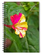 4 Oclocks Spiral Notebook