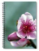 Pink Blossom Spiral Notebook