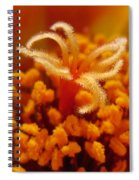 Portulaca In Orange Fading To Yellow Spiral Notebook