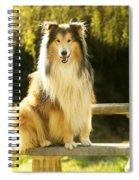 Rough Collie Dog Spiral Notebook