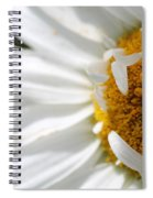 Shasta Daisy Named Paladin Spiral Notebook
