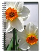 Small-cupped Daffodil Named Barrett Browning Spiral Notebook