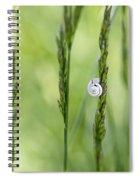 Snail On Grass Spiral Notebook