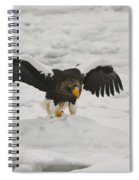 Stellers Sea Eagle Spiral Notebook