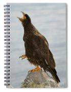 Striated Caracara Spiral Notebook