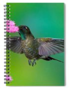 Tyrian Metaltail Spiral Notebook