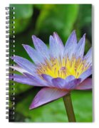 Water Lily 13 Spiral Notebook
