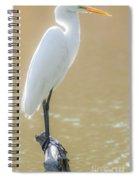 Still Waters White Heron Spiral Notebook