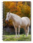 White Horse In Autumn Spiral Notebook