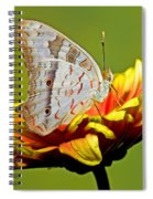 White Peacock Butterfly Spiral Notebook