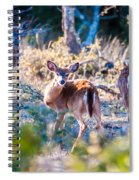 White Tail Deer Bambi In The Wild Spiral Notebook