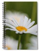 Wildflower Named Oxeye Daisy Spiral Notebook