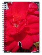 Zonal Geranium Named Candy Cherry Spiral Notebook