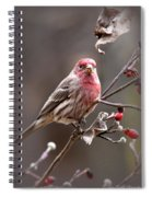 4113-005 - Fb Spiral Notebook