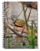 42- Florida Red-bellied Turtle Spiral Notebook