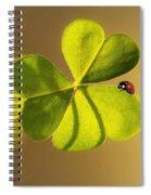 Ladybug Spiral Notebook