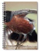 An Entertaining Baby American Robin Spiral Notebook