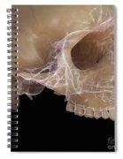 Anatomy Of The Skull Spiral Notebook