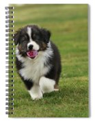 Australian Shepherd Puppy Spiral Notebook