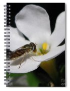 Bacopa Named Snowtopia Spiral Notebook