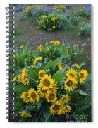 Balsamroot Spiral Notebook