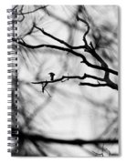 Bird In Tree Spiral Notebook