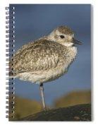 Black-bellied Plover Spiral Notebook