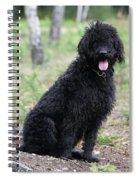 Black Labradoodle Spiral Notebook