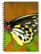 Cairns Birdwing Butterfly Spiral Notebook