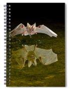 California Leaf-nosed Bat At Pond Spiral Notebook