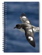 Cape Petrel Spiral Notebook