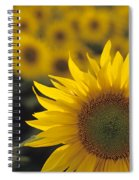 Close-up Of Sunflowers In A Field Spiral Notebook