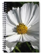 Cosmos Named Sensation Alba Spiral Notebook