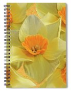 5 Daffy's On Parade Spiral Notebook