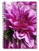 Dahlia Named Blue Bell Spiral Notebook