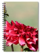 Dahlia Named Caproz Jerry Garcia Spiral Notebook