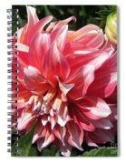 Dahlia Named Myrtle's Brandy Spiral Notebook